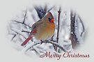 Cardinal Christmas Card by Sandy Keeton