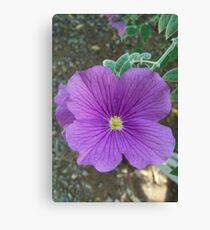 Desert Flower Canvas Print