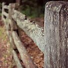 A fence somewhere... by Donna Keevers Driver