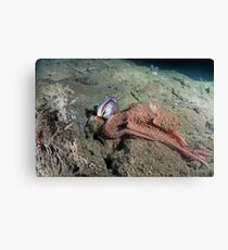 Octopus with a Sarcastic Fringe Head Canvas Print