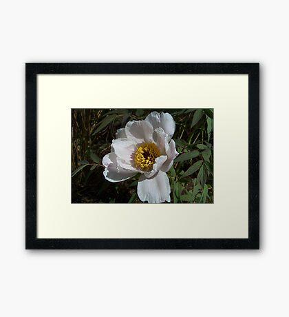 A White Flower Framed Print
