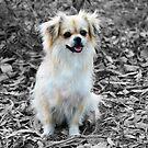 Cute Little Dog  by jackchlo333