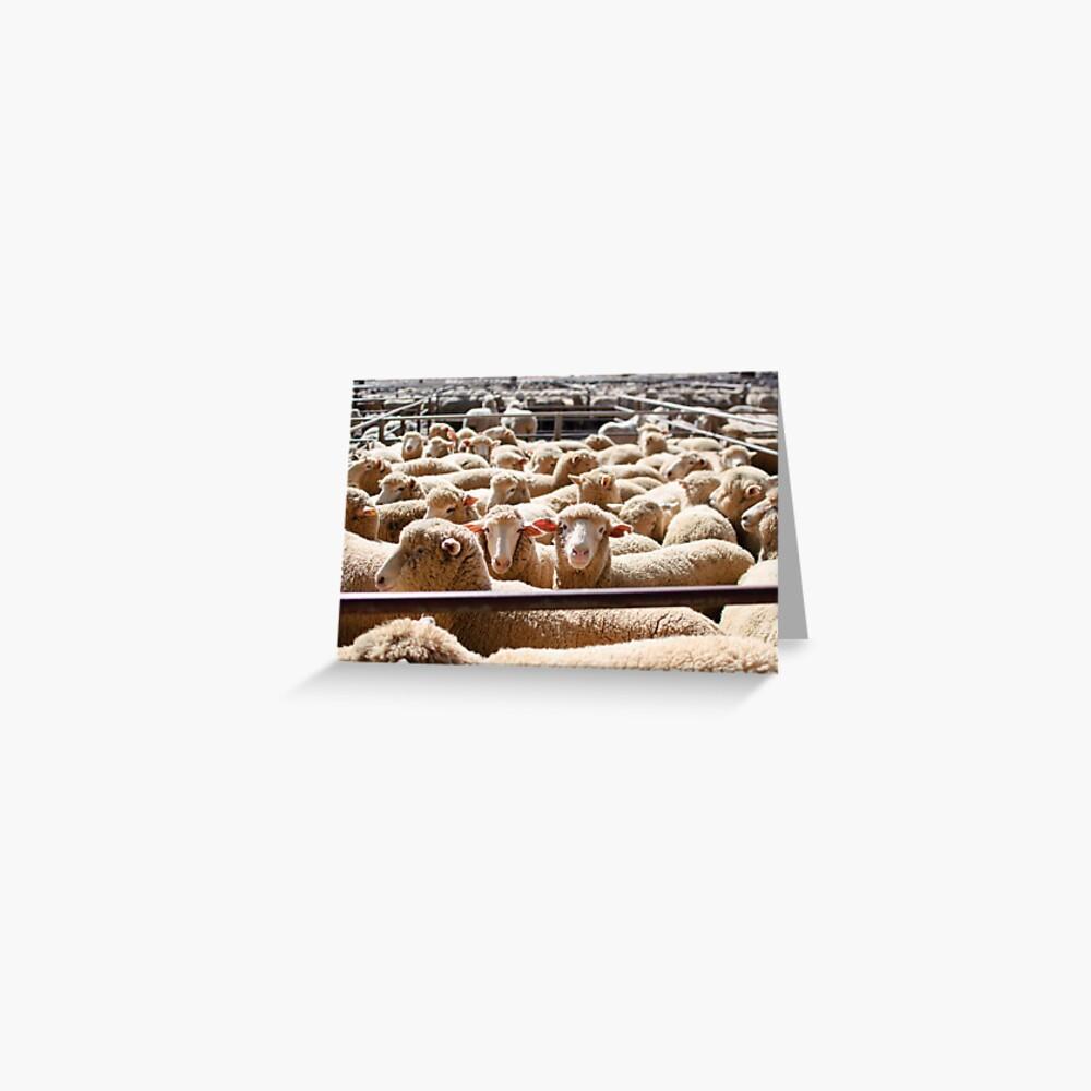Sheep Sale  Greeting Card