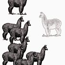 no black sheep, just a white llama by bristlybits