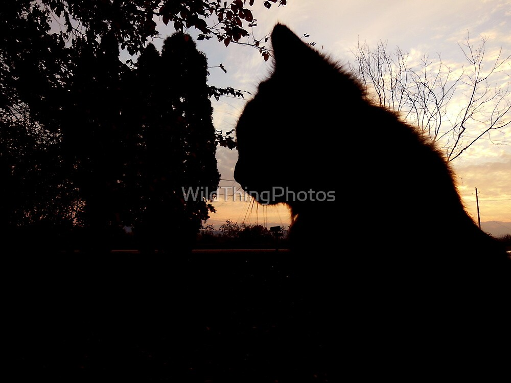 Jax in Silhouette by WildThingPhotos