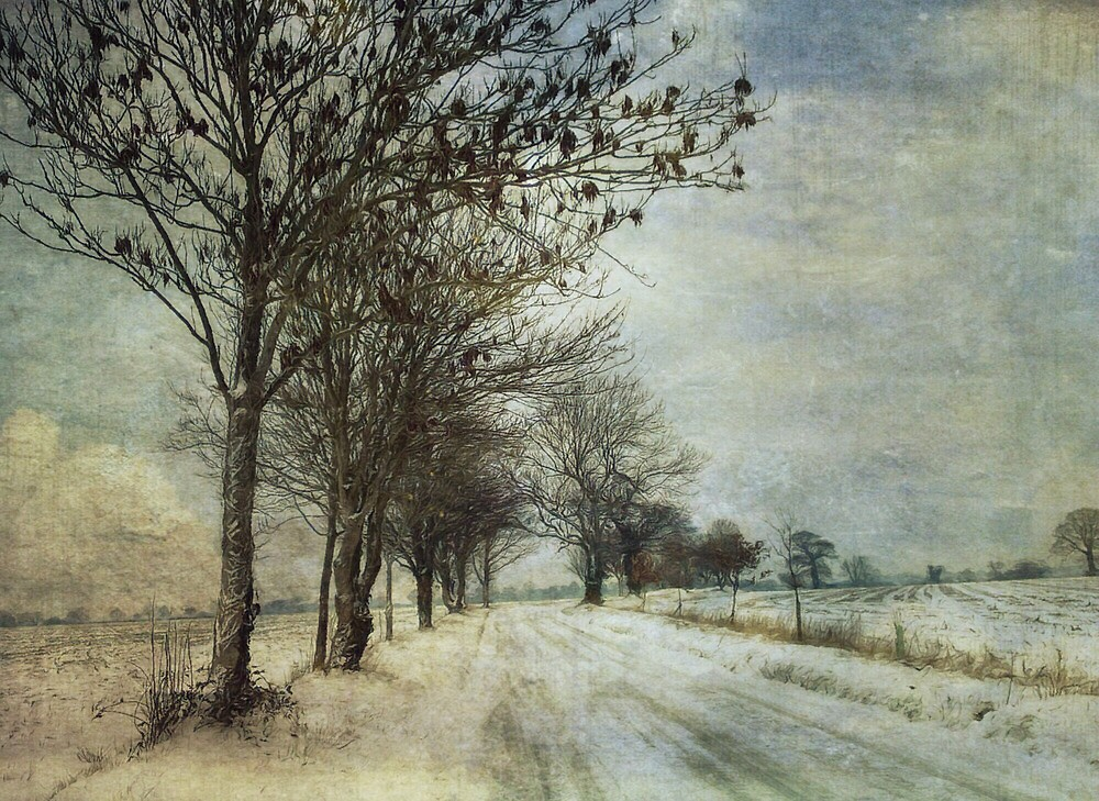 Into the cold distance by Sarah Jarrett