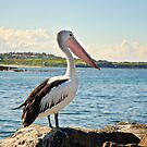 Pelican by Dilshara Hill