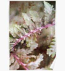 Japanese Painted Fern Summer Poster
