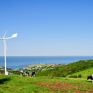 Grazing under the Wind Turbine by Dilshara Hill