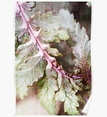 Japanese Painted Fern Summer II Poster