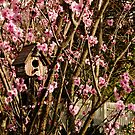 Birdhouse in the Flowering Plum Tree by Gabrielle  Lees