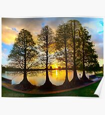 Sunset Cypresses Poster