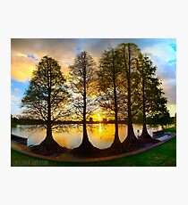 Sunset Cypresses Photographic Print
