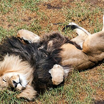 Just Lion Down by RayW