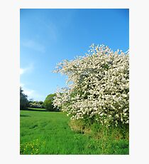 Blossoms in Spring on a green meadow Photographic Print