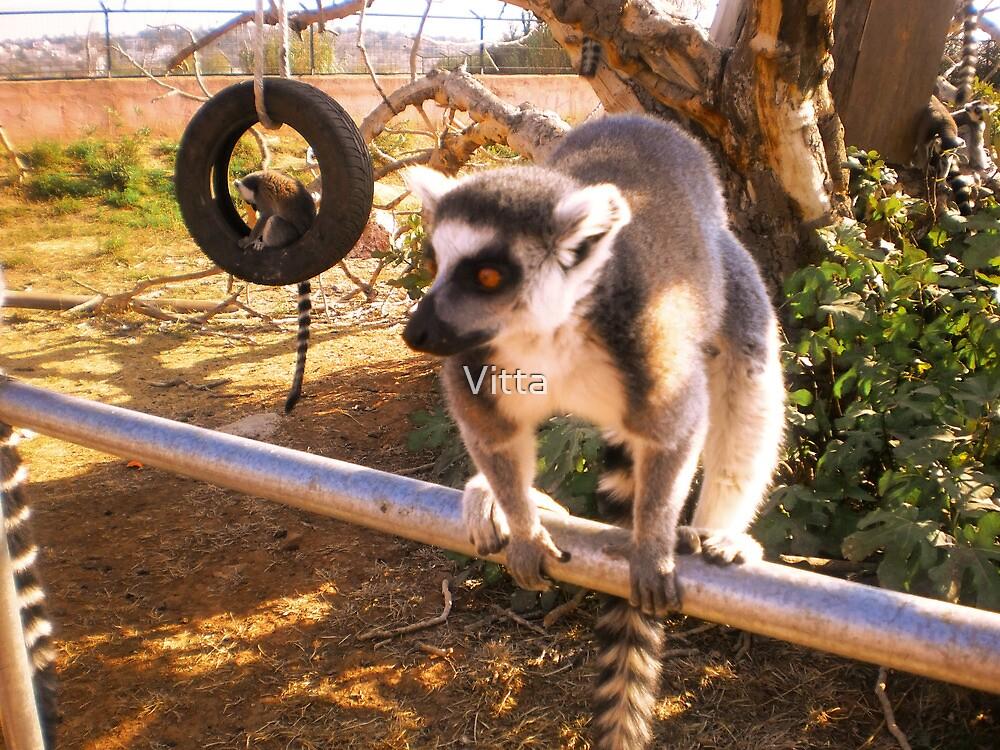 Athens Zoo - Lemur by Vitta