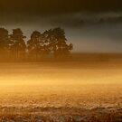4.12.2013: December Afternoon by Petri Volanen