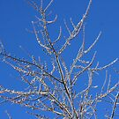 Tree in Ice 2 by artkitecture