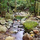 Tranquil Stream - Minnamurra Rainforest by Dilshara Hill