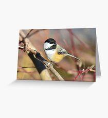 Black-capped Chickadee Greeting Card