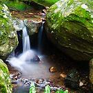 Little Waterfall - Minnamurra Rainforest by Dilshara Hill