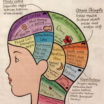 Inside A Toddlers Brain by FeralScience