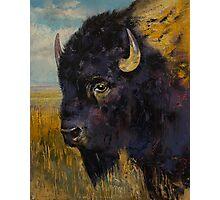 Bison Photographic Print