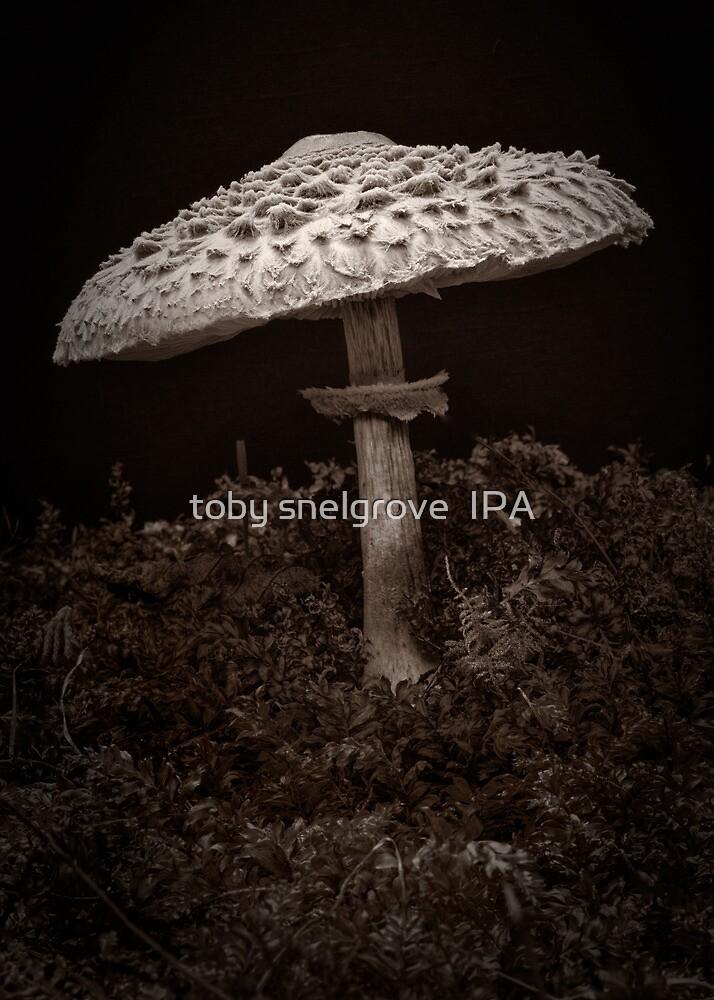 Tall Mushroom by toby snelgrove  IPA