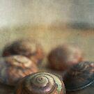 little shells by Jill Ferry