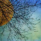 Winter Moon by Jill Ferry