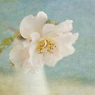 April Rose by Jill Ferry