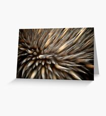 Echidna spines Greeting Card