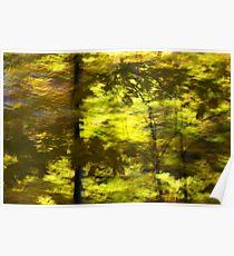 Leaf shadow study - 2012 Poster