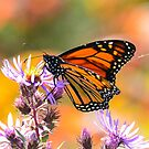 Monarch and Spider Silk by Nancy Barrett