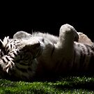 White Tiger by Jamie Kirschner