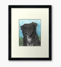 Border Collie Dog Art Portrait Cathy Peek Animal Framed Print
