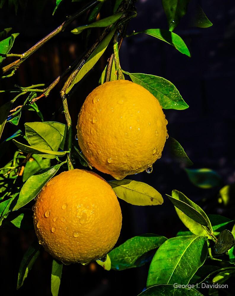 December Oranges by George I. Davidson