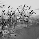 Early winter in Oulu by AndreCosto