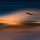73A1102 Pelican Blur by David Orias