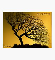 Silhouettes Calendar Cover Photographic Print