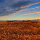 Prairie Sunburst by James Anderson
