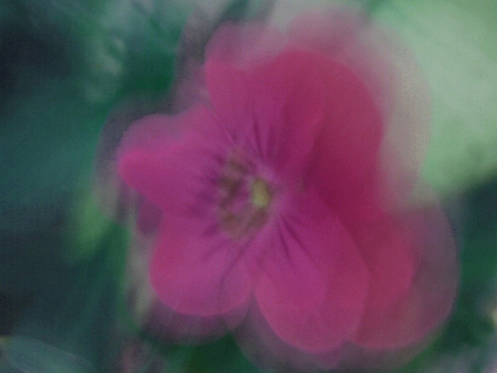 Pink Flower by donnagrayson