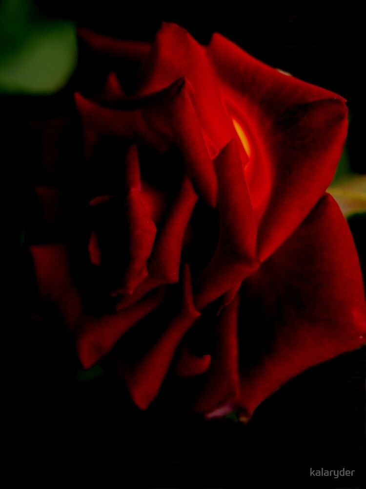 Red Diffused Rose by kalaryder