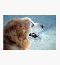 Dog Gone I Photographic Print