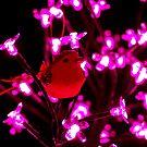Little Red Bird by Lisa Kent