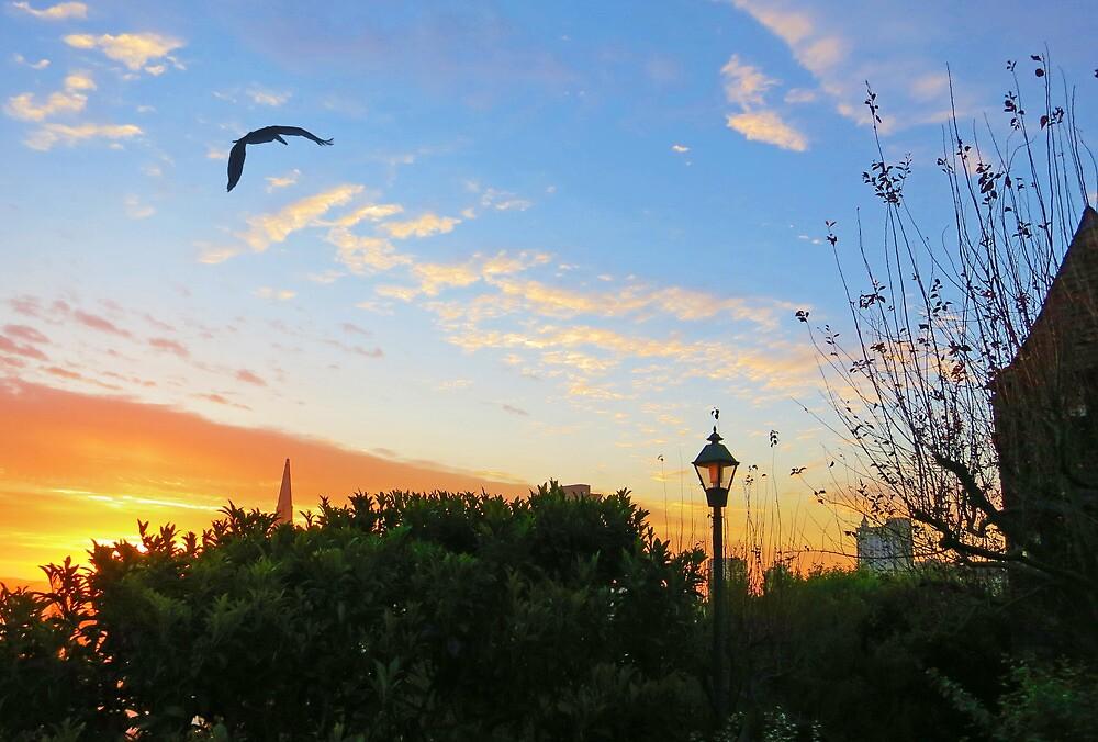 Sun Up San Francisco by David Denny