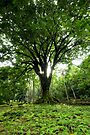 Keanae Arboretum, Maui by Michael Treloar