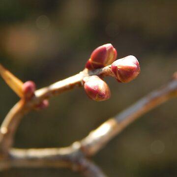 November Buds by kenspics