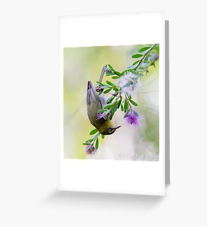 The Silvereye Greeting Card
