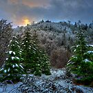 A Place In My Heart ~ Snow ~ by Charles & Patricia   Harkins ~ Picture Oregon